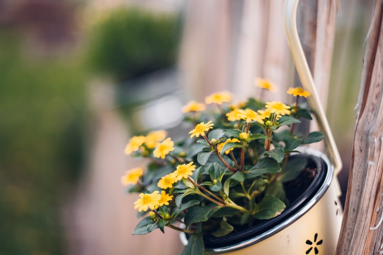 flowers for the front of your home to improve curb appeal